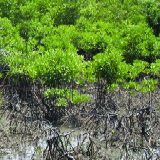 16-21/11/2020: The WESTPAC RTRC-MarBEST International Training Course 2020 on Mangrove Health Index