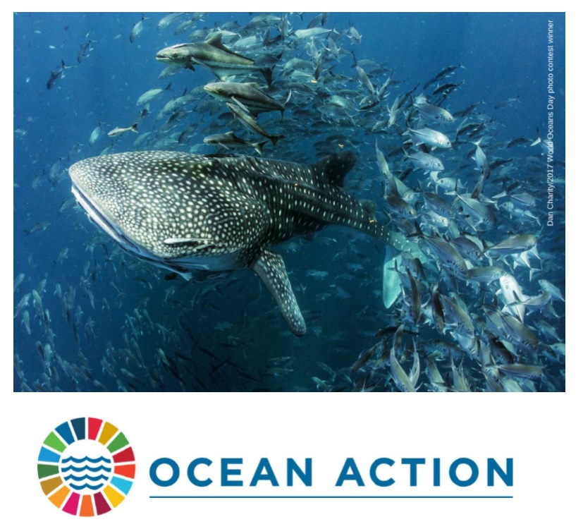 March 2019: World Wildlife Day celebrates life below water